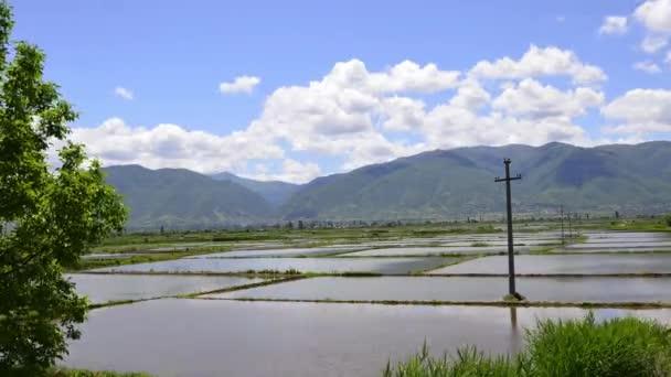 rýžové pole čas zanikla přírodní pozadí