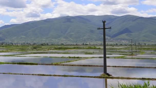 rýže rýžová pole - hd1080i timelapse
