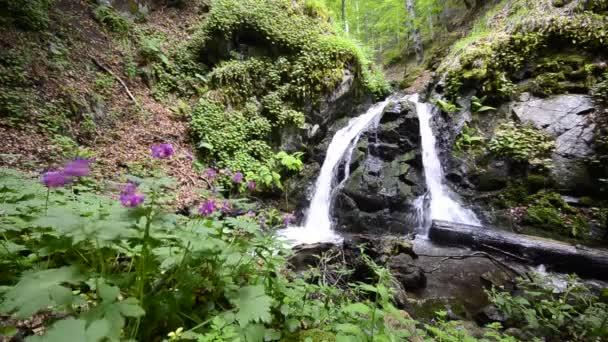 cloudforest vodopád hluboko v lese nedotčené přírody s ekologickou čistou vodou