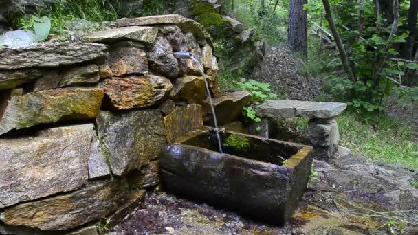 HD: ásványvíz tavaszi erdő