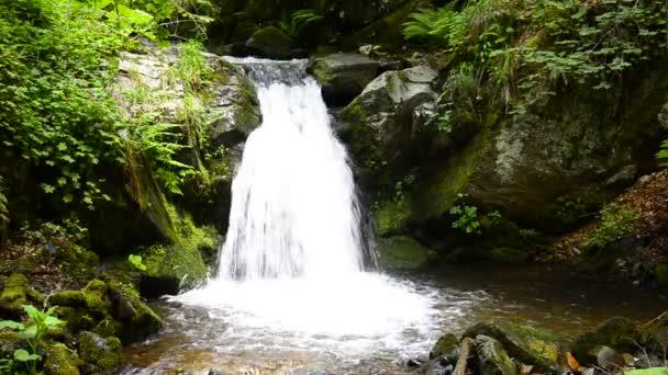 vodopád v tropickém ráji (hd smyčka), tropické vodopády v svěží lesní maui, Havaj. bezešvé opakování videa.