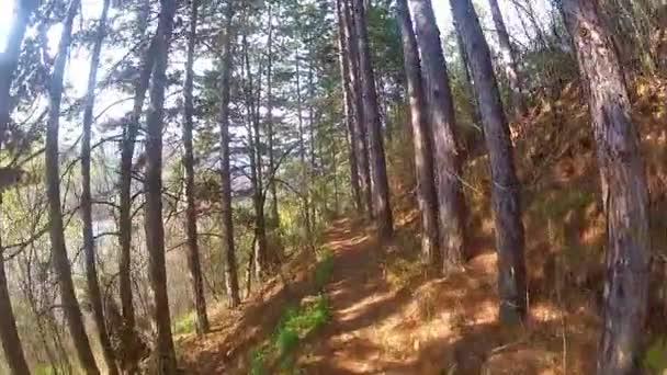 procházky v lese