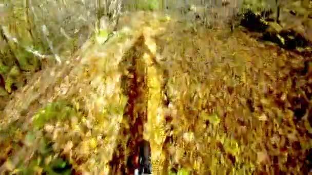 Mountainbiking in autumn forest