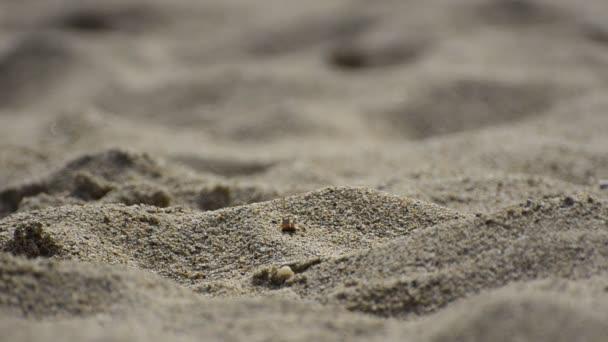 Man walking barefoot at a sandy beach desert