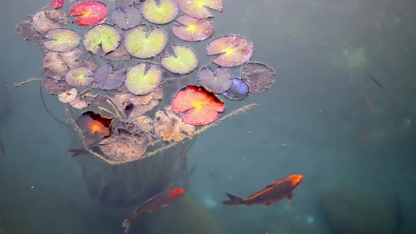 hal- és óriás liliom párna