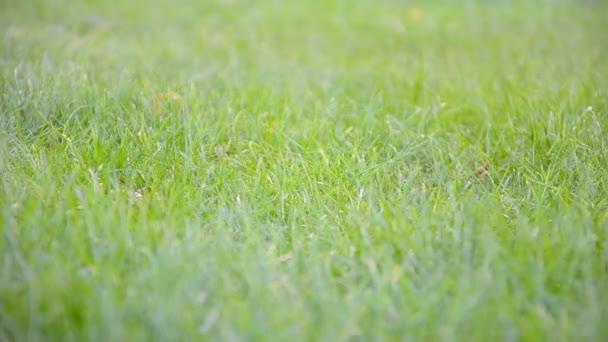 Child running in the garden