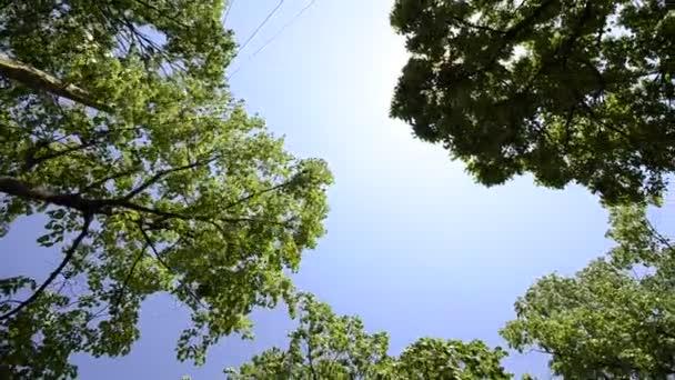 video natočené pod stromy jeřáb