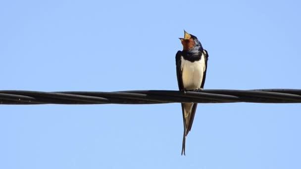 Vögel über die Hochspannungs-Leitungen — Stockvideo © zefart #49802935