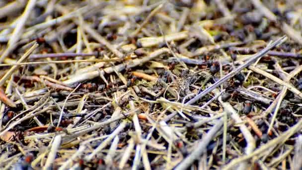 Pracovní mravenci v mraveništi