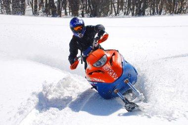 Snow Hawk sliding in the snow