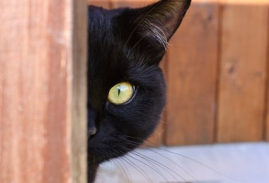 Cat peeping from behind a corner