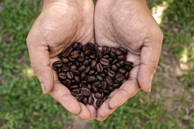 Handful of fresh organic coffee beans
