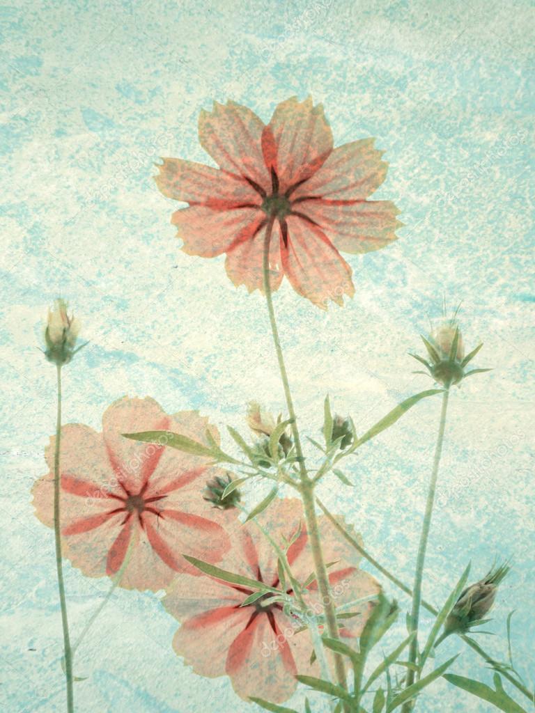 Фотообои Vintage Cosmos flowers in sunset time