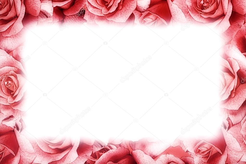 cadre rose rose photographie photology1971 27663883. Black Bedroom Furniture Sets. Home Design Ideas