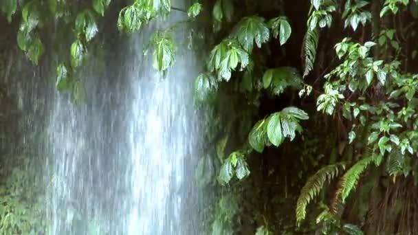 vodopád pod stromem 10204