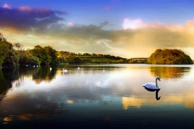 Picture of a Swan on a Lake in the Scottish Highlands stock vector