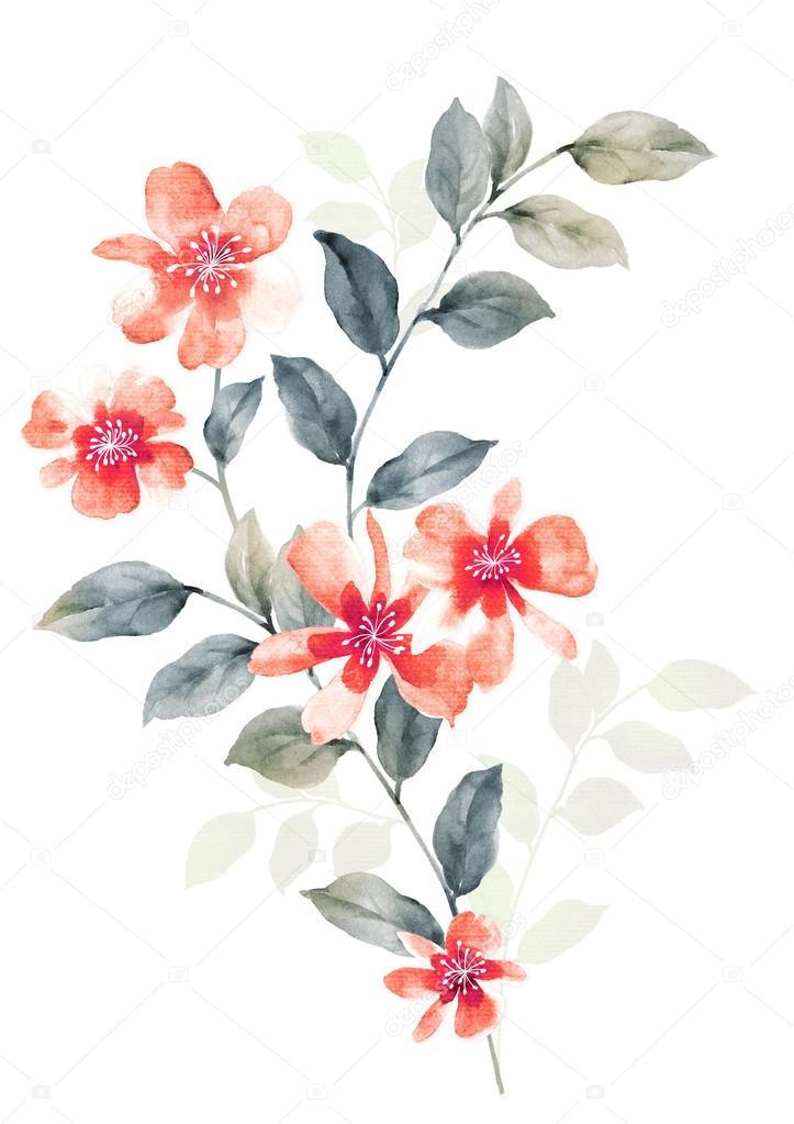 Fleurs Illustration Aquarelle Photographie Shu999 C 47480375