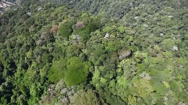 Aerial helicopter fly over tropical forest on hills
