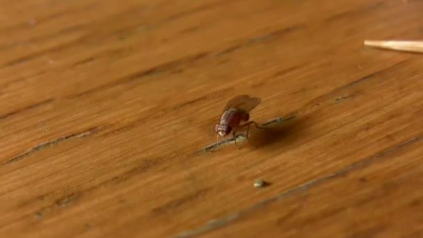 Ház repülni rovar-asztal élelmiszer
