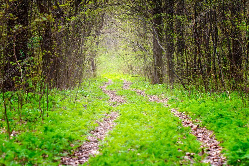 Фотообои Way in deep spring forest, selective focus