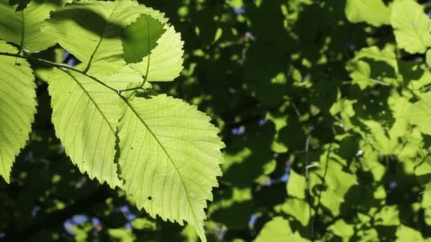 zelené listy na pozadí mírný vítr