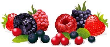 Berries isolated
