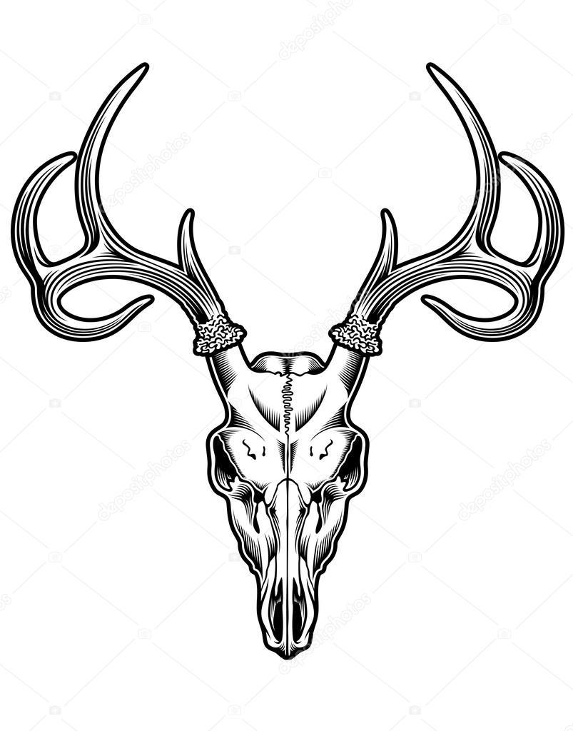 animal skull stock vectors royalty free animal skull illustrations