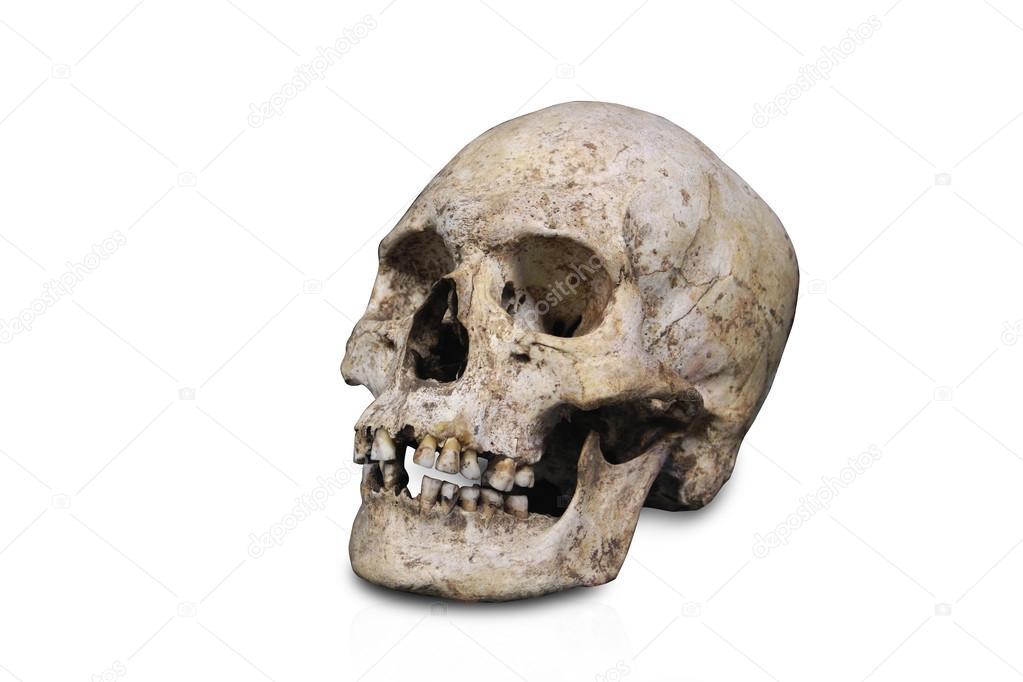 menschliche Anatomie Schädel, isoliert — Stockfoto © ezumeimages ...