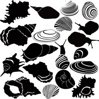 Variety of snails