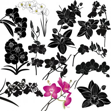 Orchids flowers isolated on white