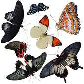 Fotografia collezione di insetti farfalle