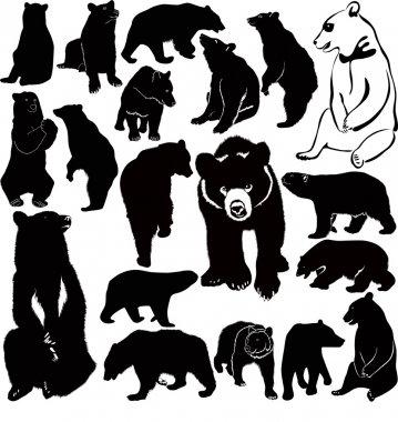 Bears illustration