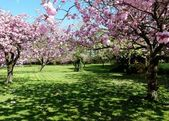 Fotografie Frühling Blüte, Heaton Park, Manchester, Großbritannien