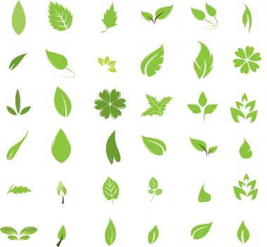 Isolated leaves stock vector