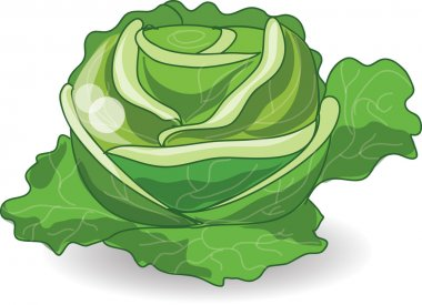 Cartoon cabbage