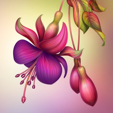fuchsia flower with green leaves