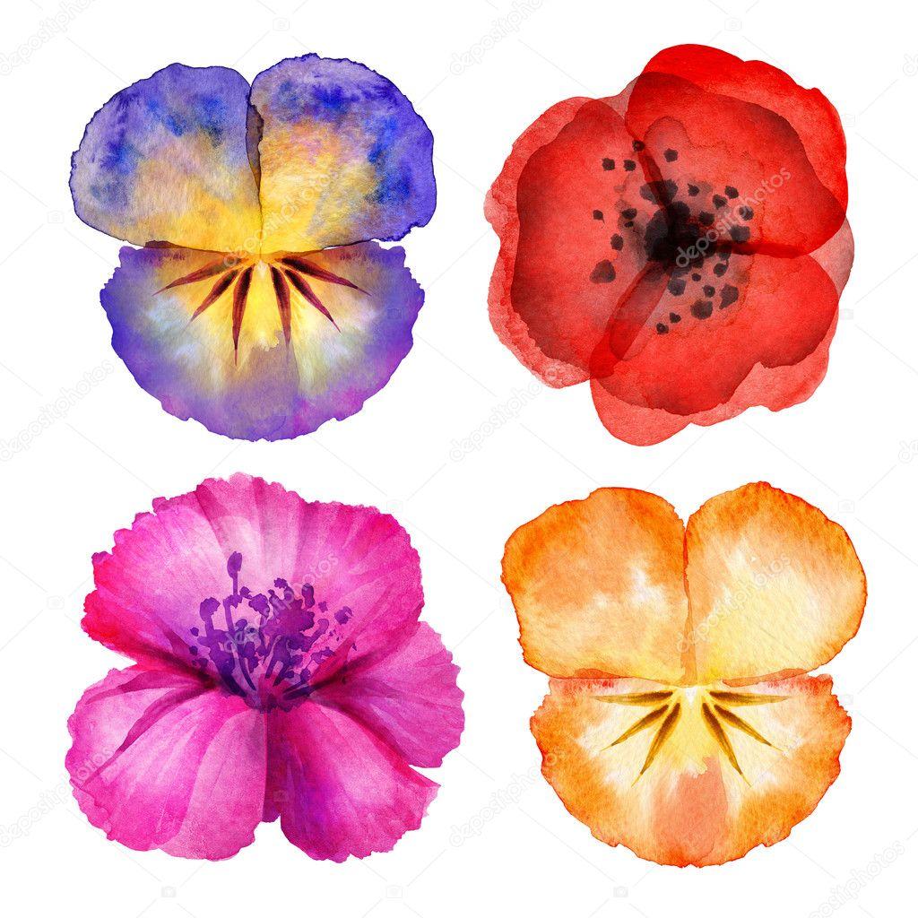 Watercolor painted flower design elements