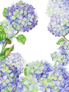 Watercolor painted hydrangea flowers