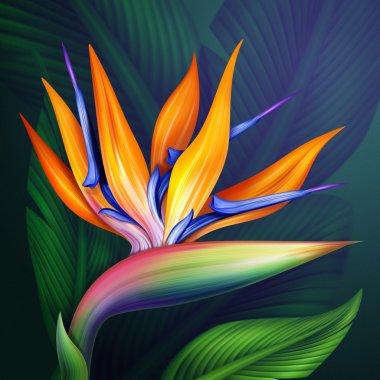 Strelitzia bird of flower