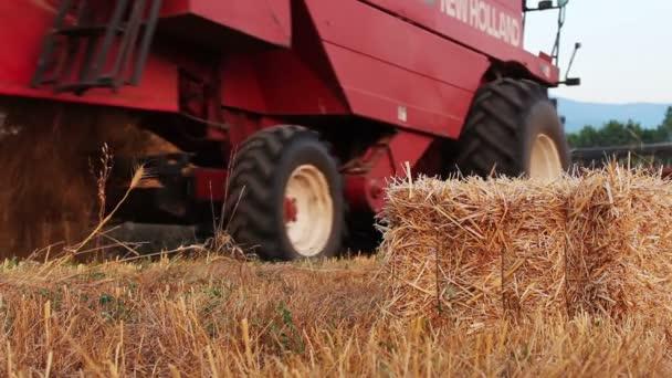 Combine harvester working in wheat field