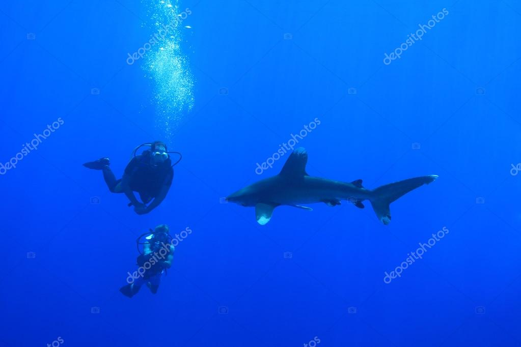 Oceanic whitetip shark and scuba divers