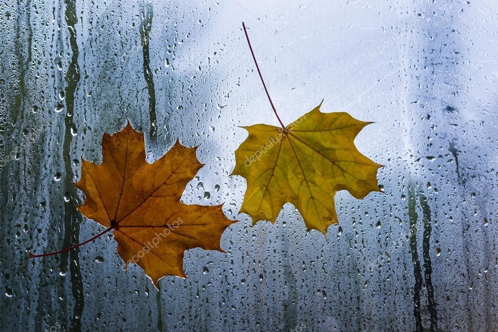Осень дождь зонт картинки