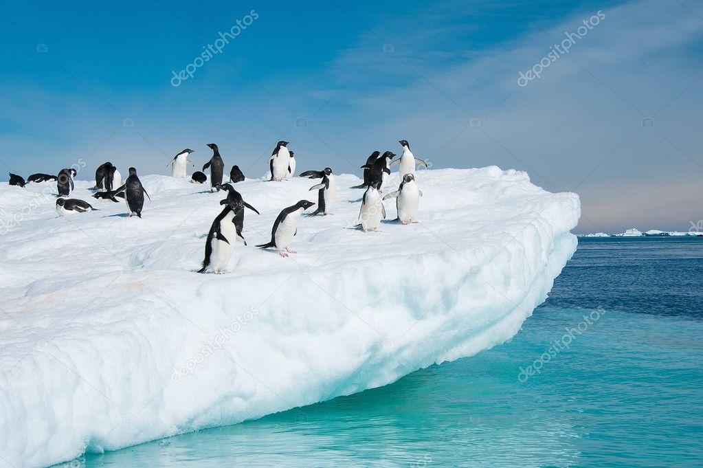 Adelie penguins jumping from iceberg