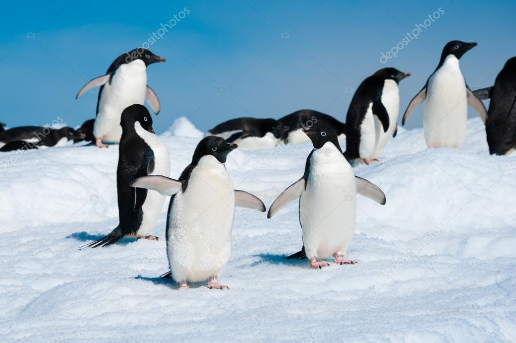 Penguins in the Antarctic sea