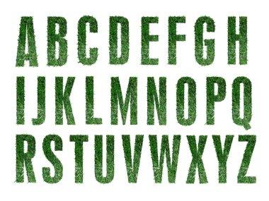Grass Alphabet