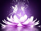 Fotografie krásný Lotosový květ