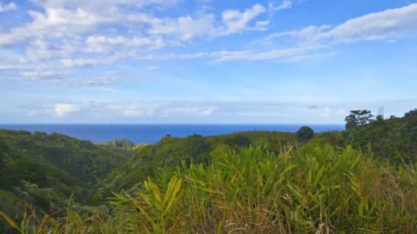 Trópusi völgy