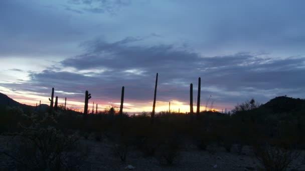 pouštní západ slunce s kaktusy - časová prodleva