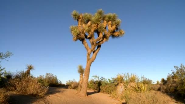 západ slunce pouště Joshua tree