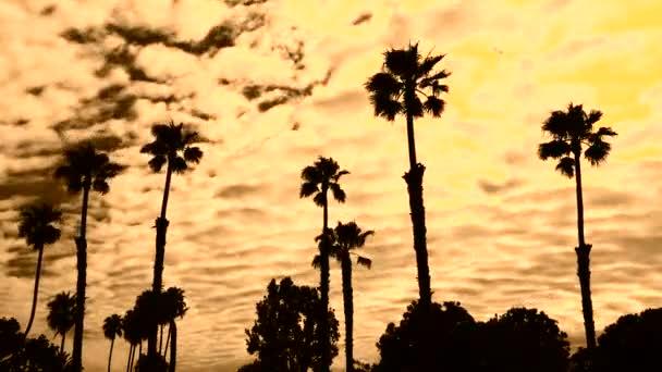 tramonto dietro la palma